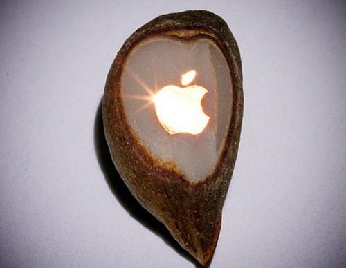 Golden apple logo on a grain of apple