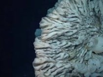 This Minivan-sized Sea Sponge Could Be The World's Oldest Living Animal