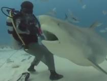 Shark Sighted At Coney Island Beach