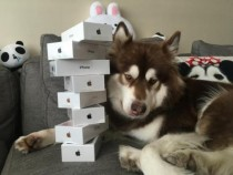 Lucky Dog With 8 iPhone 7