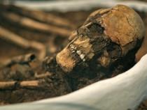 Neolithic Skeleton