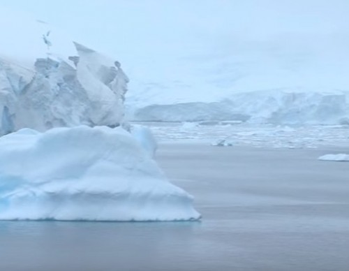 Antarctic Marine Protected Areas Could Be In Danger, Here's What You Can Do To Help