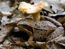 Fungi and frog