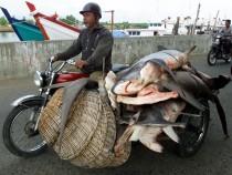 Shark Transport