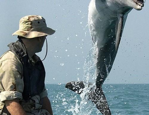 Attack Dolphin