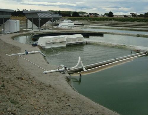 Biofuel Algae In New Zealand