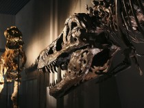Fossilized Dinosaur Brain Found By Researchers