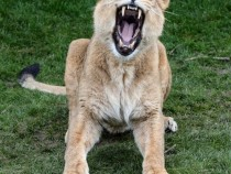 Mammals In Zoos Live Longer, Study Reveals
