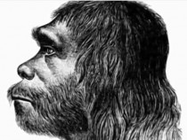 Neanderthal Genes Gave Homo Sapiens The Ability To Adapt