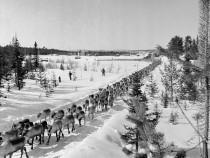 Reindeer Train