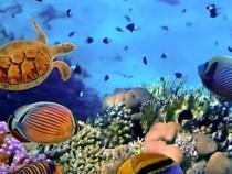 Ocean Acidification Already A Warning For Marine Life And Habitat