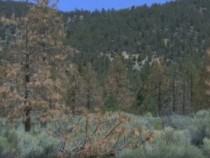 Drought In California Has Killed 100 Million Trees