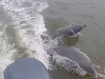Everglades Dolphins Poisoned By Mercury Contamination