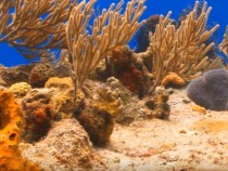 Corals Might Be Older Than Previously Thought