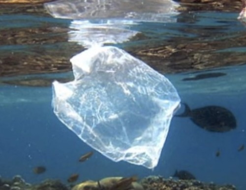 Beach Litter Shows A Rise In Plastic Product Use