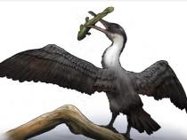 New Type Of Prehistoric Bird Discovered