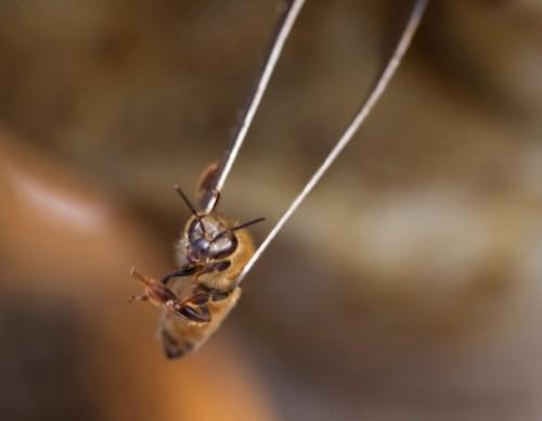 Finally, Nature's Answer To HIV: Bee Venom