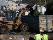 Christmas Trees In San Franciso Are Turned Into Biomass To Burn For Electricity