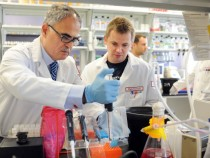 HIV Can Now Be Cured By Blocking Type I Interferon Protein