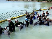 Rescuers Rush To Save Stranded Dolphins