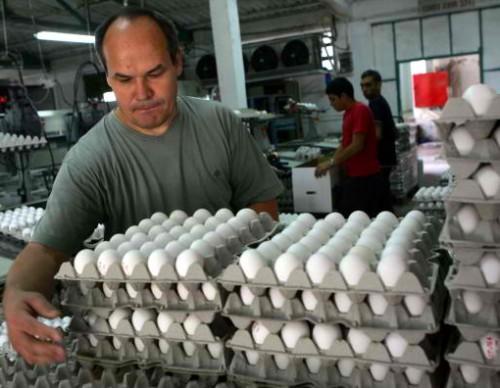 Poultry Farmers Livelihood Threatened By Avian Flu