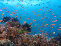Australia's Great Barrier Reef Almost Drowned And Died 125,000 Years Ago