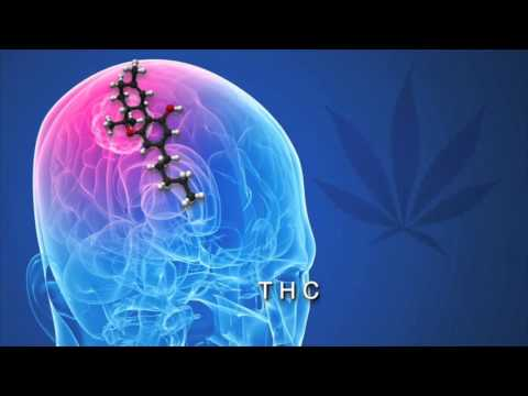 Science Explains How Cannabis Kills Cancer Cells