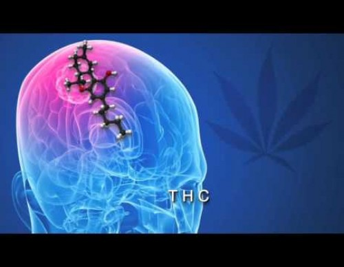 Science Explains How Cannabis Kills Cancer Cells