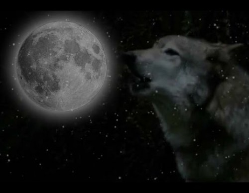 Wolf Moon - What Is It? When Does It Occur?