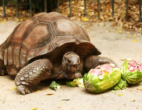 Animals Celebrate Christmas At Taronga Zoo