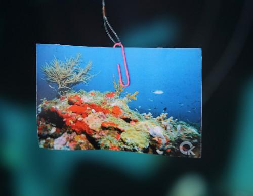Global Warming Causes Large Portion Of Japan's Coral Reef To Die