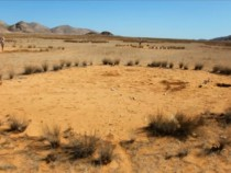 Nature's Greatest Mystery Namibia's Fairy Circles