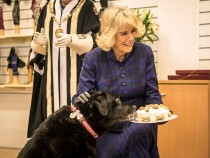 Duchess Of Cornwall Visits Dents Factory