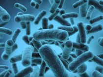 Bacterial Enzyme Can Stop Body From Fighting Diseases