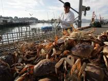 Commercial Crab Season Begins In Bay Area