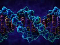 Human Genes Regulating Code Unlocked By Scientists