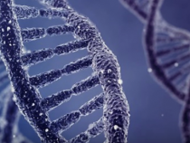 New 'Jurassic Park?' Synthetic DNA Created New Organisms