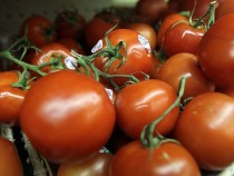 Uncommonly Cold Weather Causes Shortage Of Popular Vegetables In U.S.