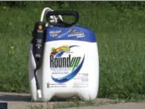 Monsanto Trying to Cover Up Deadly Health Risks of Roundup