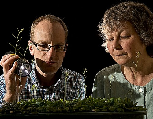 Plants and biologists