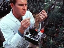 US Biotech Crops