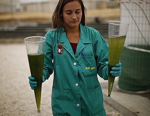 Biofuel algae plant worker