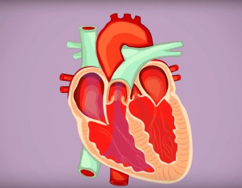 Further Study Made On Atrial Fibrillation Heartbeat