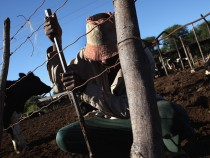 Nation Struggles to Feed Itself Following Land Reform