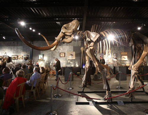 Auction Of A Complete Woolly Mammoth Skeleton