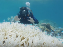 Reef Health Suffers Due To Intense Global Warming