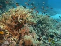 What Is Coral Bleaching? Could It be The New 'Normal' In The Future? Details Inside