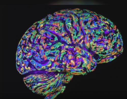 Human Brain Produces Fructose