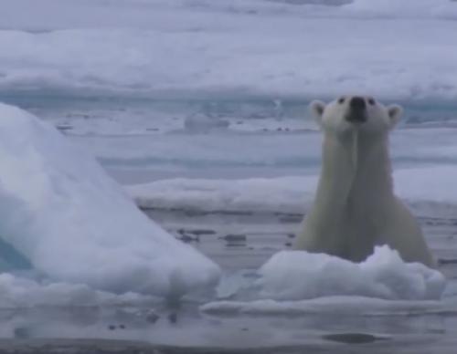 Global Warming Plays Havoc With Arctic's 'Nature Clock'