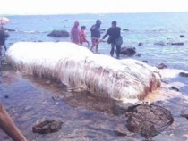 Video: Carcass of Mysterious, Hairy Sea Monster Washes Up In the Philippines